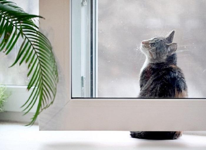 Даже котику понятно! / Источник фото: trial66.ru