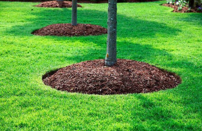 Мульчирование деревьев. / Фото: agrostory.com