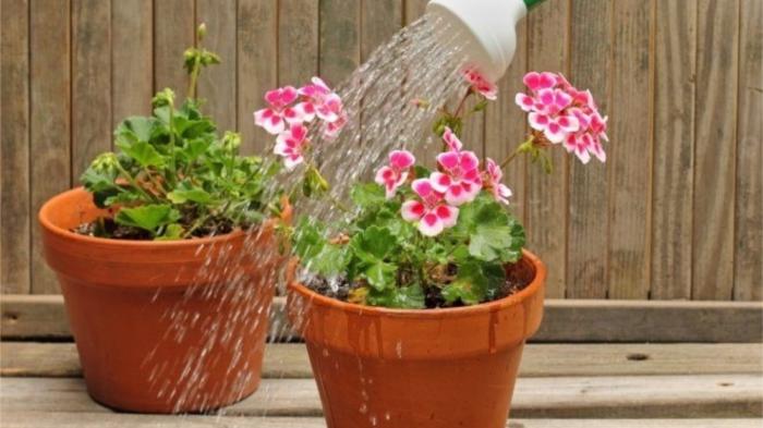 Чрезмерный полив весьма опасен для комнатных растений. / Фото: thisisdacha.ru
