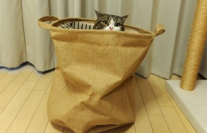 Кот в мешке мил только в прямом смысле этого выражения. / Фото: darudar.org