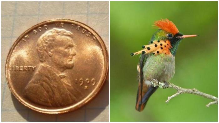 Один цент весит как колибри.