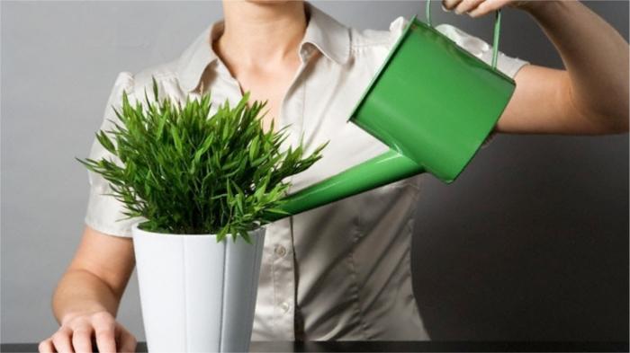 Поддержим комнатные растения зимой. / Фото: frend.org.ua/