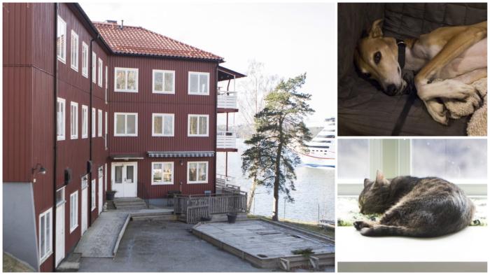 Нет, это не отель у моря. Это приют для бездомных животных в Швеции. / Фото: citydog.by