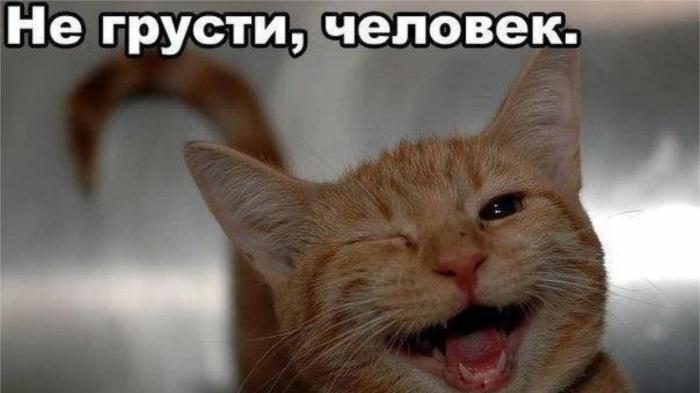 О том, что не надо грустить, мы хотели бы слышать лишь от котиков. / Фото: stihi.ru