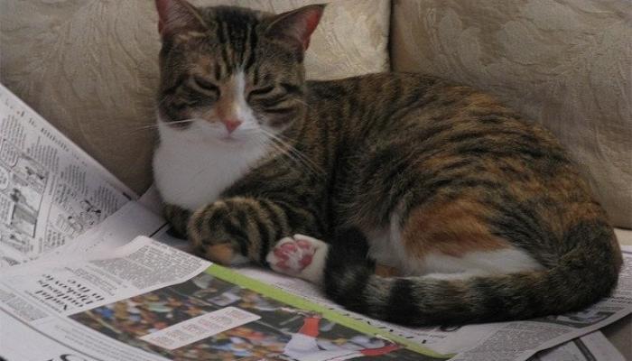 Экологичная, раз в неделю утилизируемая подстилка для любимца. / Фото: tuxedo-cat.co.uk