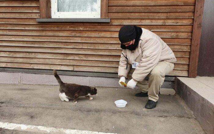 Влажный корм - правильное решение. / Фото: vplate.ru