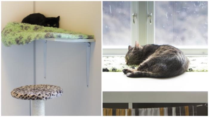 Котам очень комфортно жить в таком приюте. / Фото: citydog.by