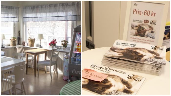 Приюты для животных в Швеции похожи на фешенебельные отели. / Фото: citydog.by