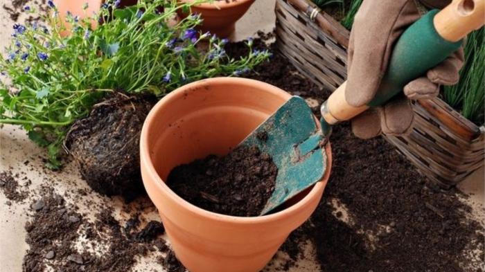 Комнатные растения ОБЯЗАТЕЛЬНО нужно пересаживать по мере разрастания корней. / Фото: flowertimes.ru
