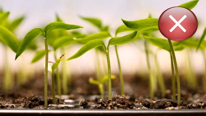 Частый посев к добру не приведет.