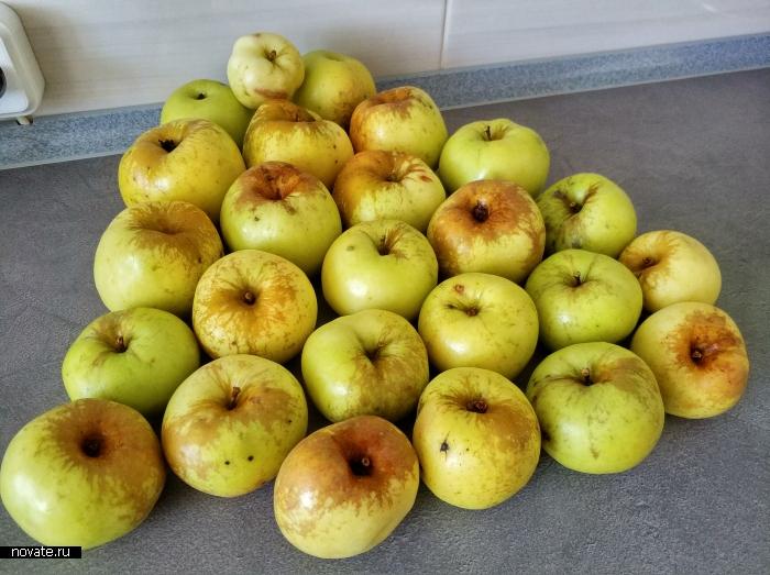 Килограмм яблок.