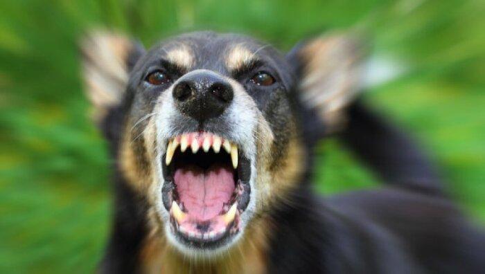 Ваша собака лает? Штраф или изъятие питомца. / Фото: mke.ee