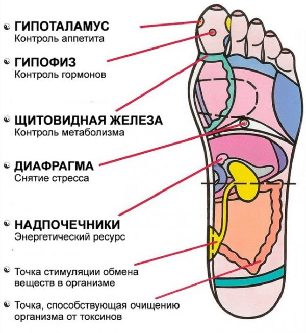 Зоны на стопе./ Источник фото: pinme.ru