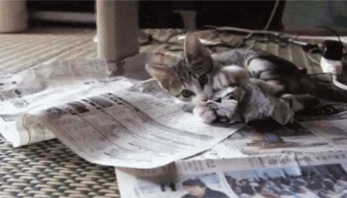 Кошка ляжет на все, что вы предложите. / Фото: pikabu.ru