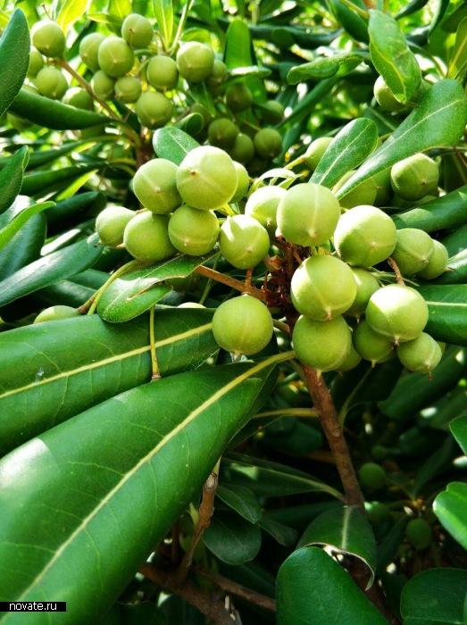 Оливковые деревья  - то, что вместо кустов стран умеренных широк.