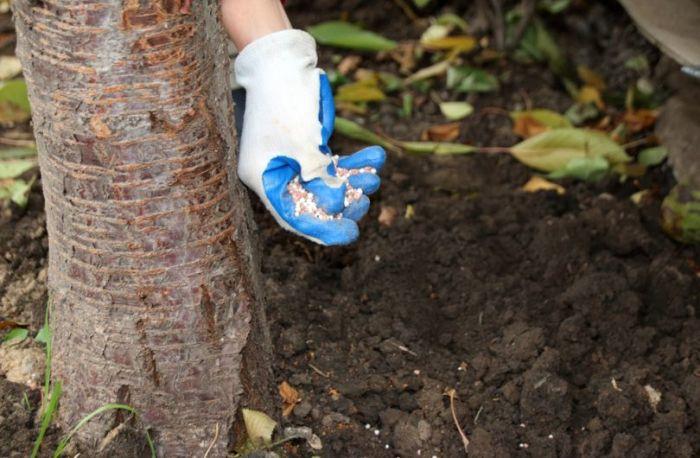 Покормите растения осенью. / Фото: superdom.ua