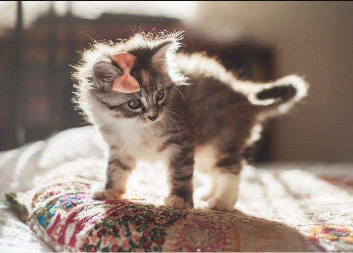 А я не могу быть пропагандой! / Фото: aminoapps.com