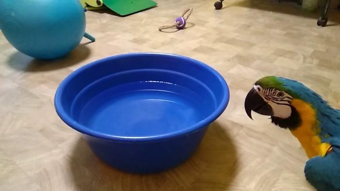 Тазик с водой чуть-чуть поможет при жаре. / Фото: youtube.com