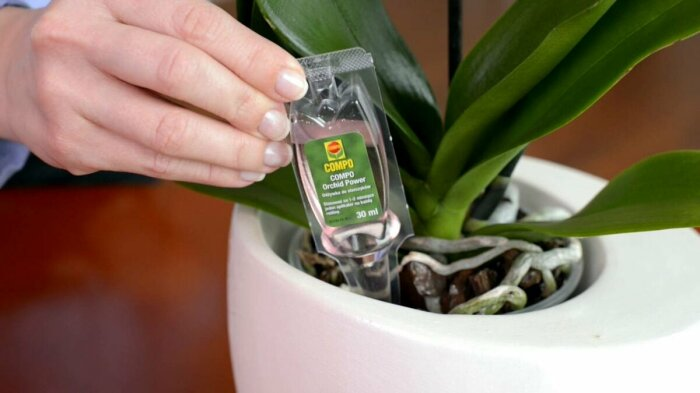 4 способа спасти комнатные растения от обезвоживания в период мощного отопления