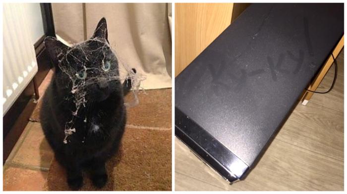 Интересно, где побывал этот кот? Не под кроватью ли?
