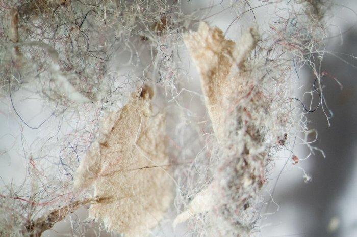 Пыль со стеллажа жилой комнаты под микроскопом. Да, мы этим дышим!
