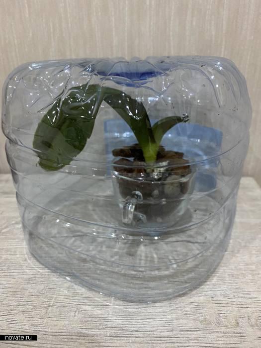 Тепличка для реанимации орхидеи без корней.