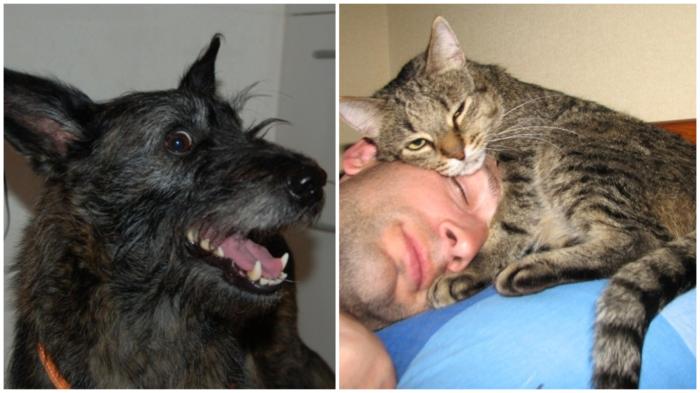 «Грелка-конкурент»: в меру упитанный кот способен отапливать до 1/4 поверхности хозяина…