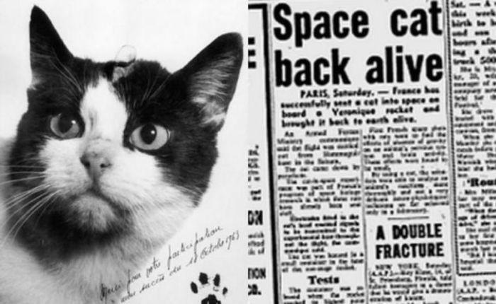 Первая кошка-космонавт Фелисетта