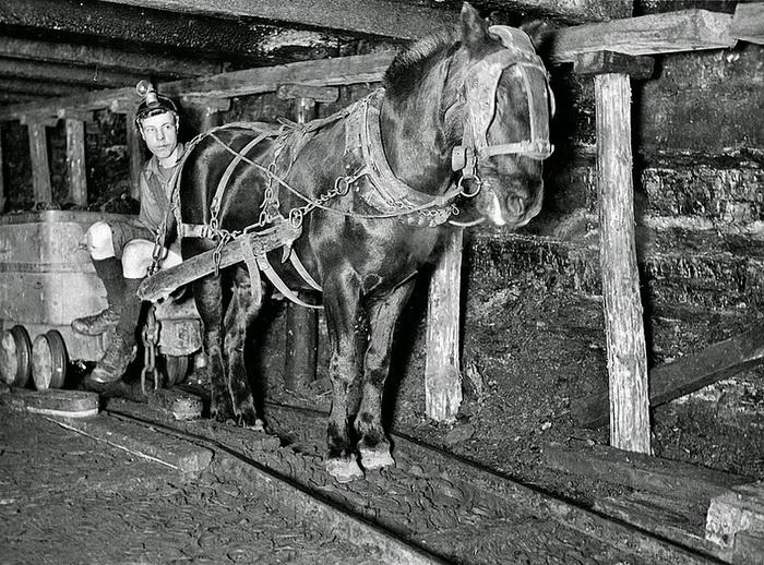 Лошади — основная рабочая сила в шахтах несколько веков назад.