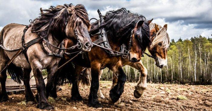 Почему именно лошадиные силы?