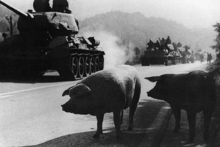Война из-за свиньи. | Фото: Википедия.