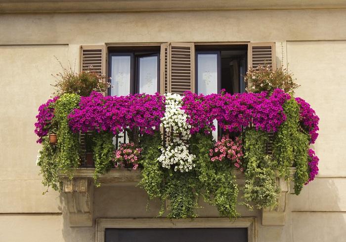 Плетущиеся цветы украсят балкон со стороны улицы. / Фото: furnishhome.ru