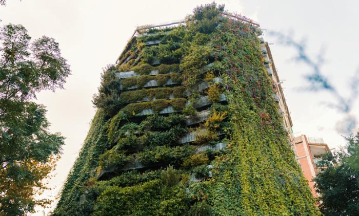 Вьющиеся растения на фасаде. | Фото: ikomek.kz