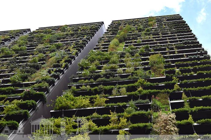 Вид озеленения: живая стена. | Фото: arch-sochi.ru