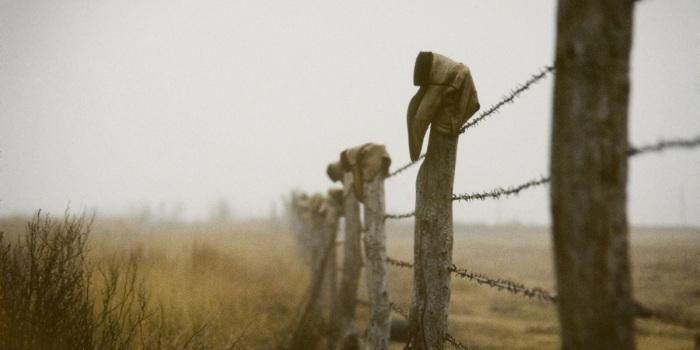 Колючая проволока оказала огромное влияние на историю Америки. /Фото: nag.ru