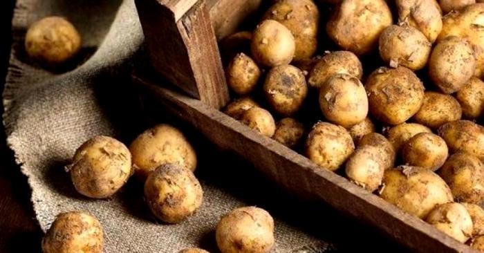С виду обычная картошка, а стоит как хороший смартфон. /Фото:  nortebonaerense.com