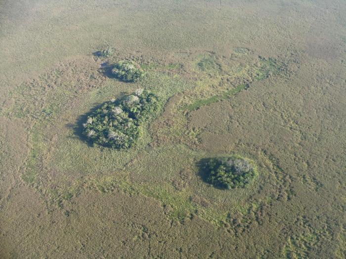 Не все так просто оказалось с земледелием в Амазонии. /Фото: eurekalert.org