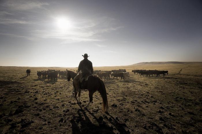 Долгое время на прериях свободно себя чувствовали только ковбои. /Фото: ozy.com