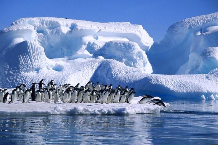 Единственные полноправные жители Антарктиды - это пингвины и другие представители тамошней фауны. /Фото: visit-petersburg.ru