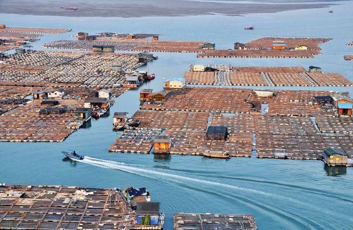 Такие хозяйства загрязняют море. /Фото: animalworld.com.ua