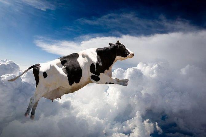 Летающая корова оказалась не фантастикой. /Фото: chrontime.com