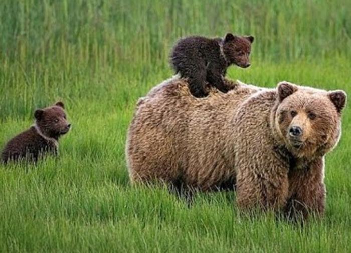 Русский медведь и свиреп, и мил. / Фото: newizv.ru