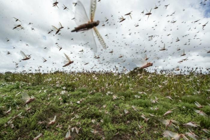 Библейская чума весьма реальна для самолетов. /Фото: leonardo.osnova.io