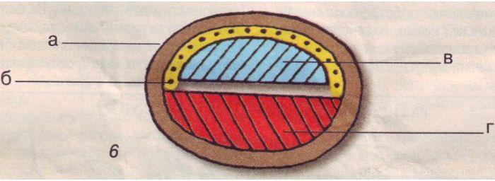 Разрез лука демонстрирует использование бересты (а), сухожилия (б), березы (в) и можжевельника (г). /Фото: rusdarpa.ru