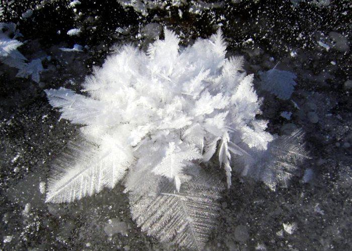 Замороженный цветок вблизи. /Фото: curious-world.ru