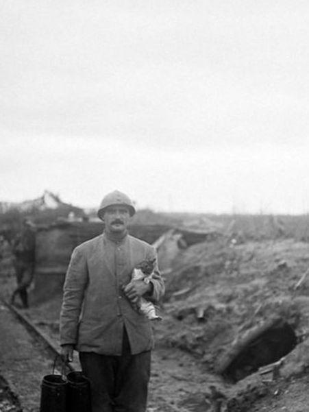 Коты жили в окопах вместе с солдатами. /Фото: newsno.ru