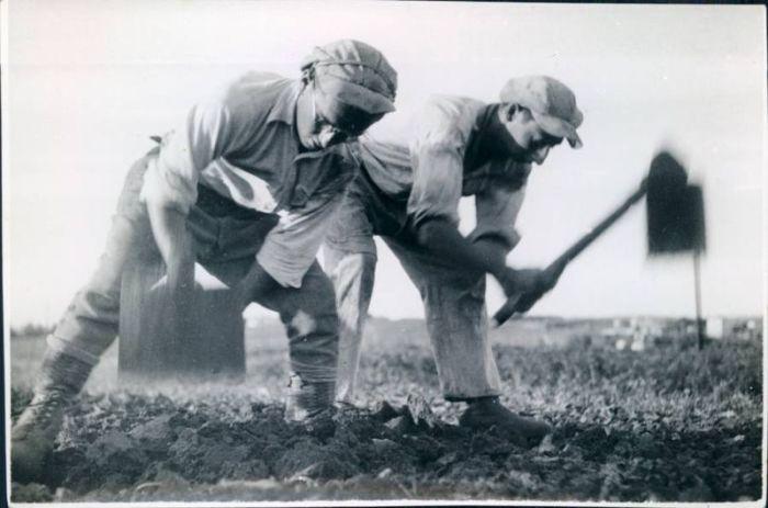 Фермеры в поле, 1930-е годы. /Фото: animalworld.com.ua