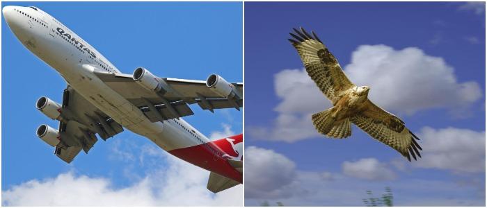 Одна из основных составляющих железного крыла была заимствована у птиц. /Фото: meteovesti.ru, team-bhp.com