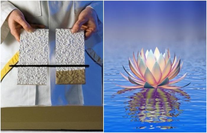 Удивительное свойство лотоса помогло создать краску, которая не пачкается. /Фото: sto-shop.ru, depositphotos.com