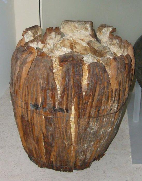 Болотное масло. /Фото: animalworld.com.ua